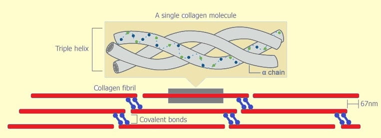 Collagen Figure